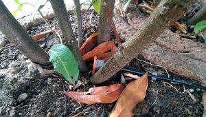 Gardena Microdrip regulierbarer Tropfer